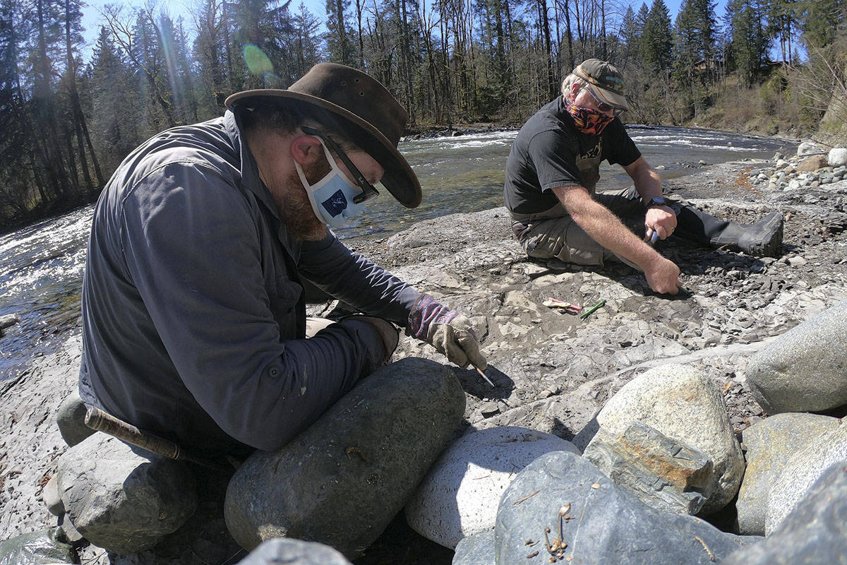 Russ Ball (left) and another team member work to extract an ancient turtle fossil from along the Puntledge River in January 2021. (Credit: Derek Larson)